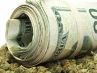 Cannabis Wealth12